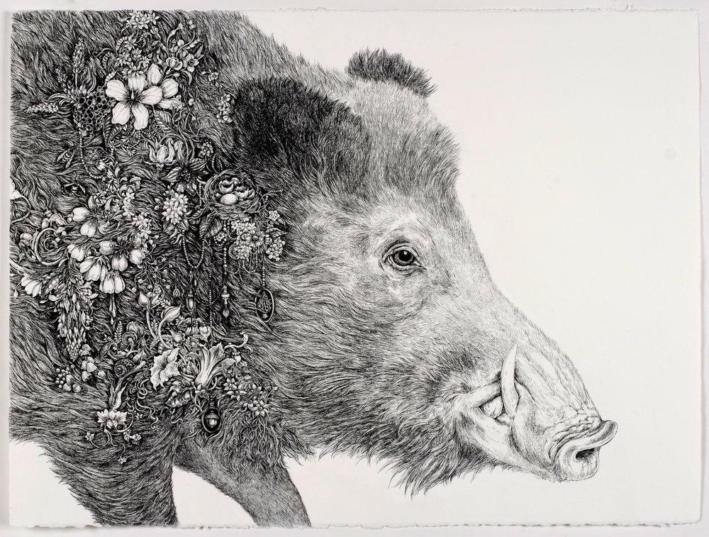Root (Boar)