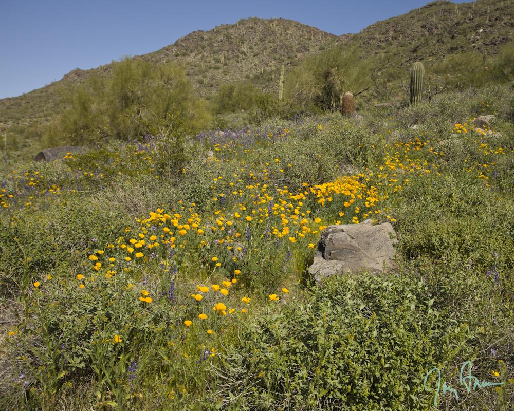 Freeman-Law-Slideshow-Arizona-hiking-wildflowers.JPG