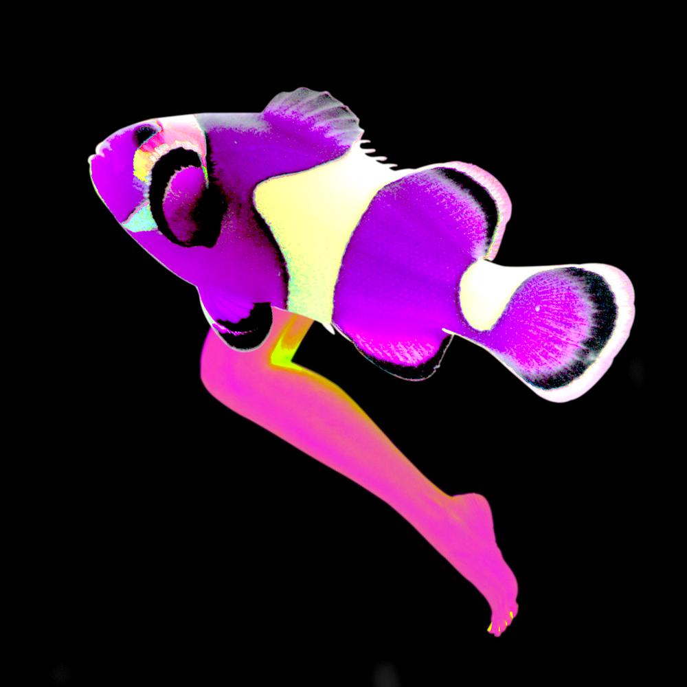 JumpinLegfishB3.jpg