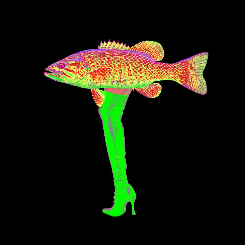 legfish3.jpg