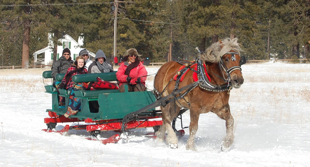 Horse Dashing-001.jpg