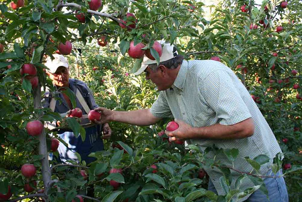 Kent Karstetter | Starr Ranch Grower