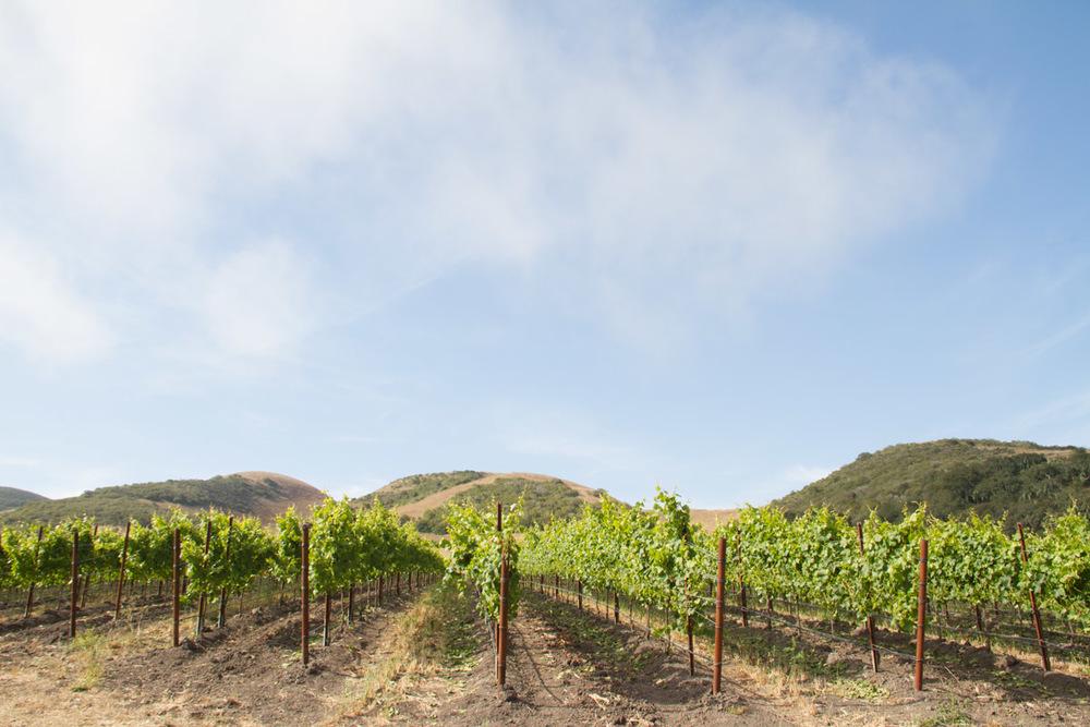Rancho de la Viña, Santa Rita Hills