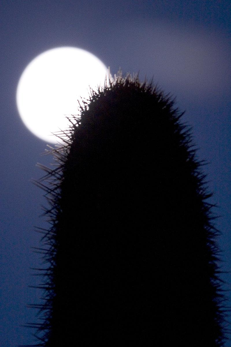 cactus and moon, Punta de Lobos