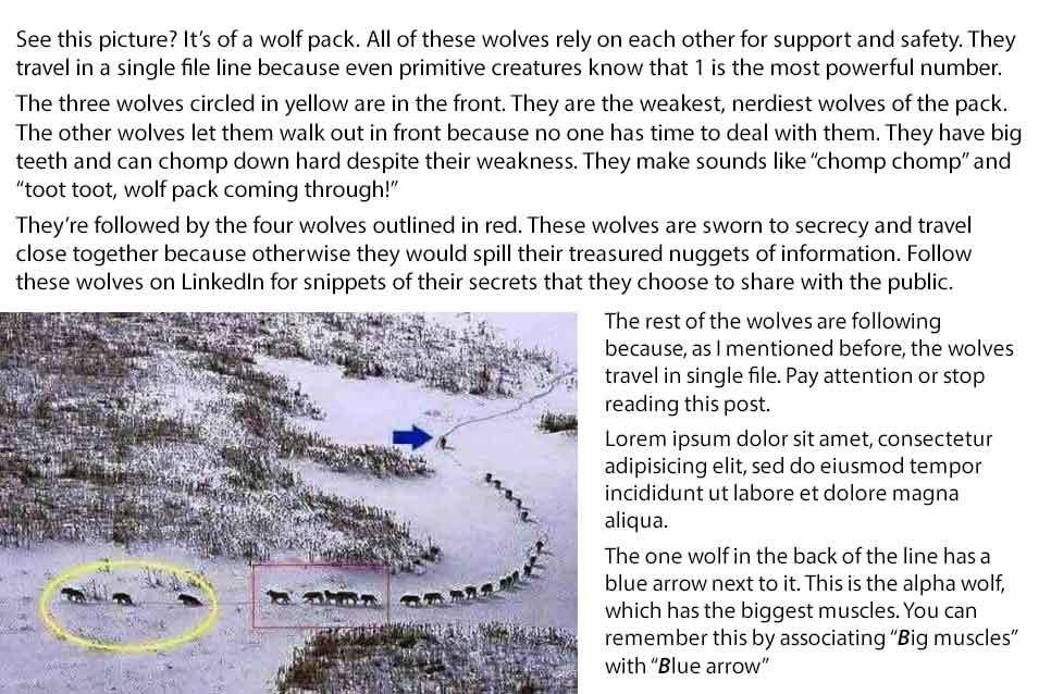 wolfpacklow3.jpg