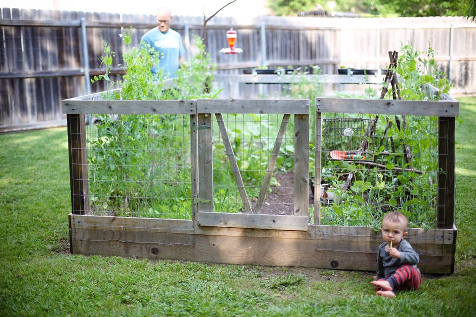This was our garden last April 2016, little boys grow faster than a garden. Youngest spindle boy chomping on asparagus.