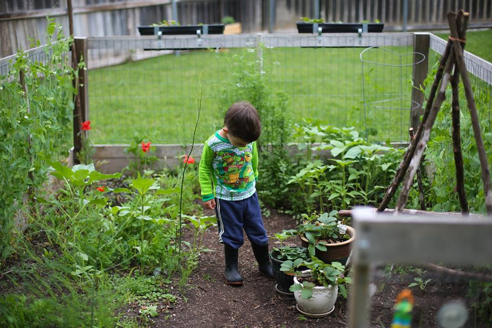 Our favorite gardening attire is pajamas. To the left we have an asparagus bed, I planted two year old asparagus roots (from Home Depot) in February 2014 and have had asparagus in the spring ever since! We let our asparagus turn in to trees late summer and build up energy for the next harvesting season.