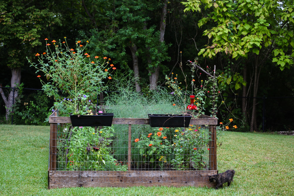 Spindle garden - a wild mix of Mexican Sunflowers, zinnia, asparagus, cardinal climber, morning glory, basil, bell peppers, red salvia, dill, black-eyed susans, and who knows what else!