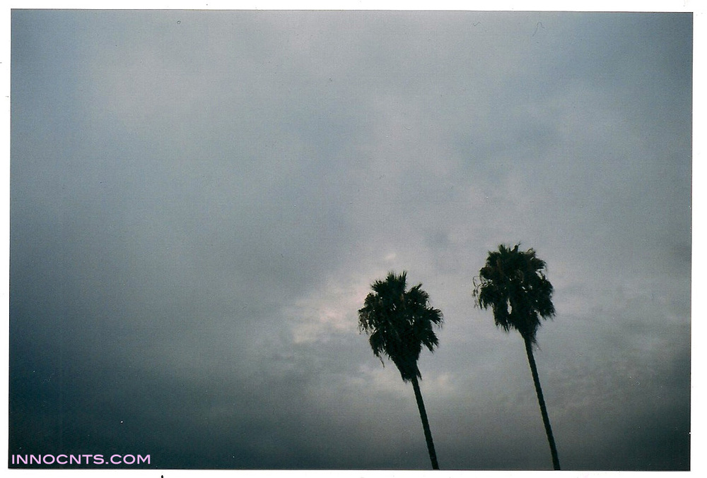 trees innocnts.jpg