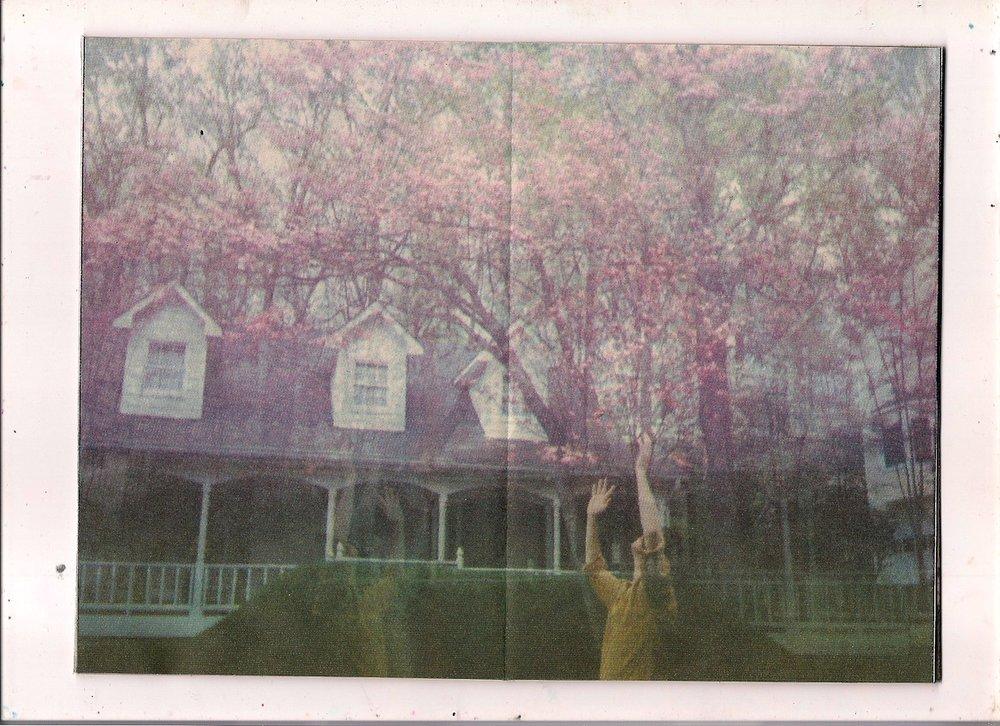 teebs trees.jpg