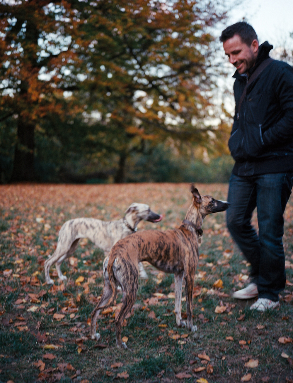 dogs-4.jpg