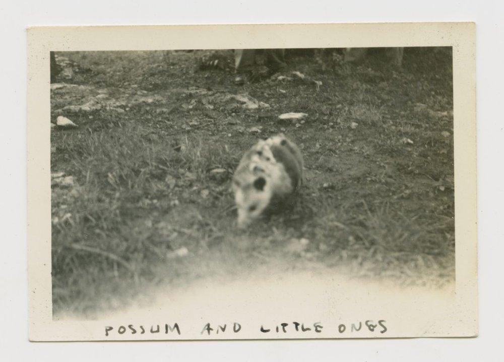 Album Pictures-321.jpg