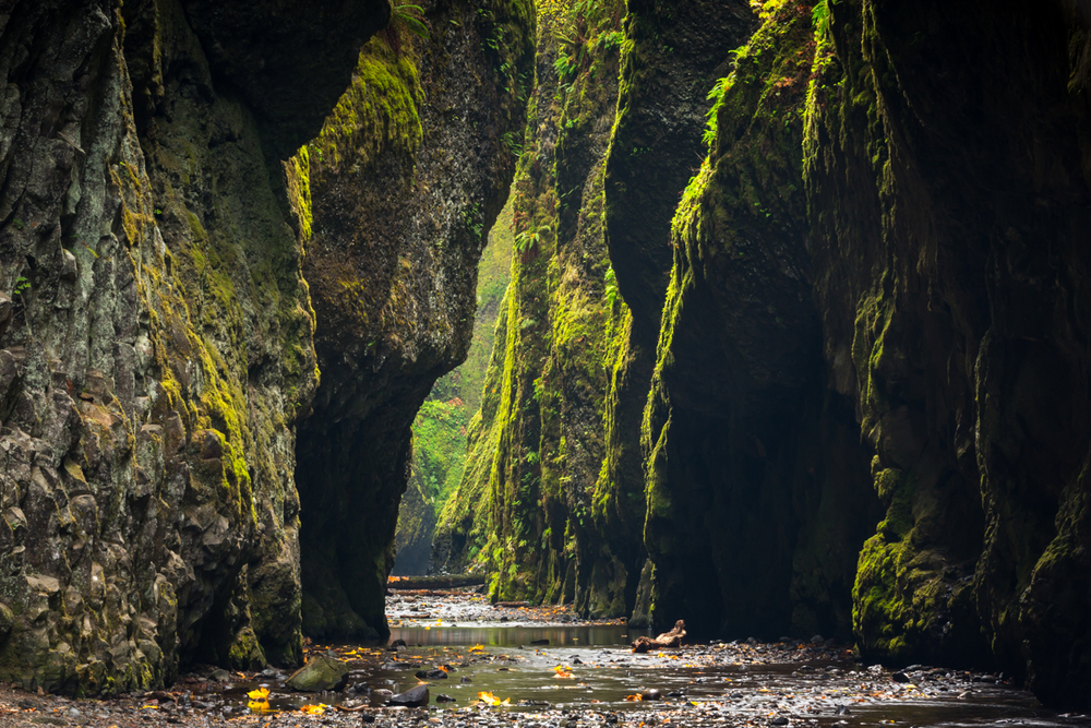 Oneonta Gorge    |    Columbia River Gorge    |    Washington