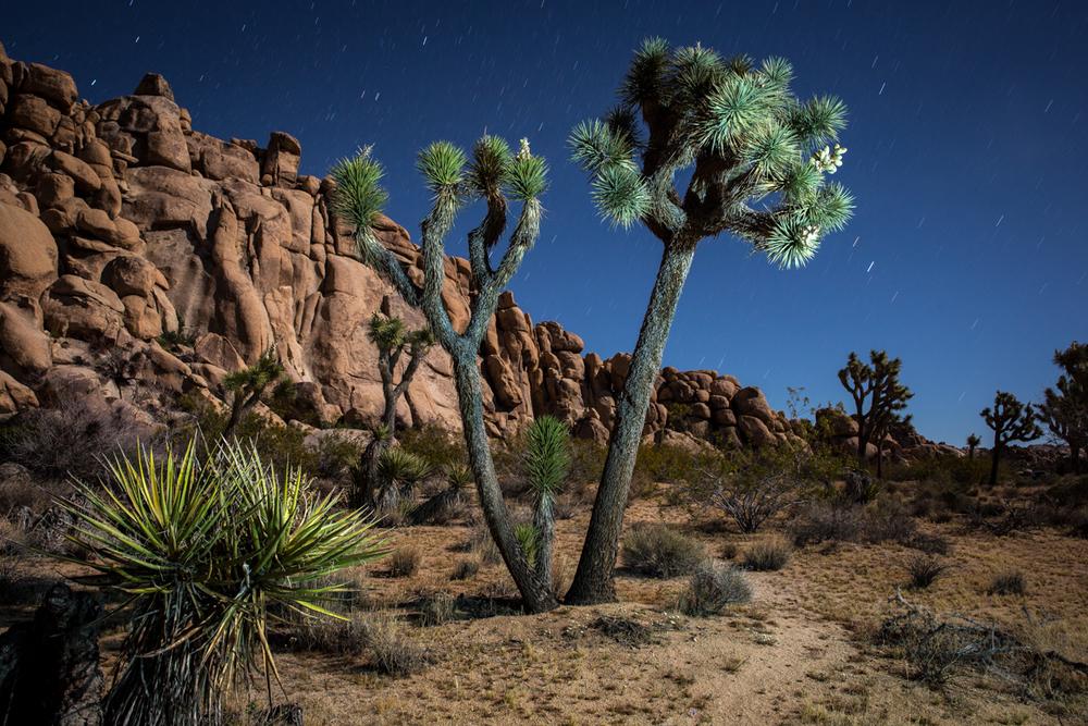 Joshua Tree National Park  |  California