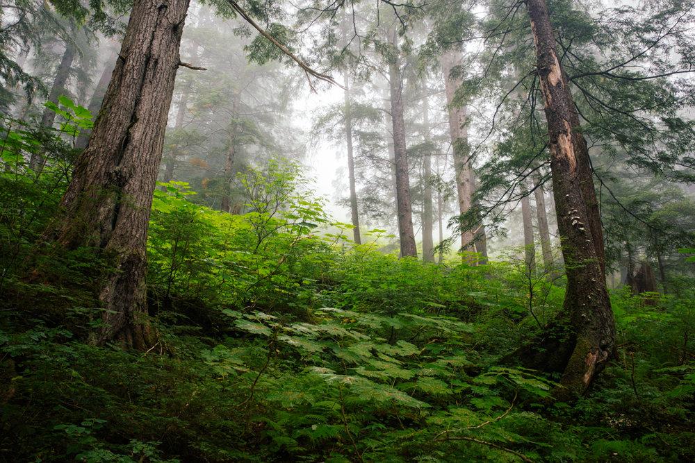 Sitka National Historic Park  |  Sitka  |   Alaska