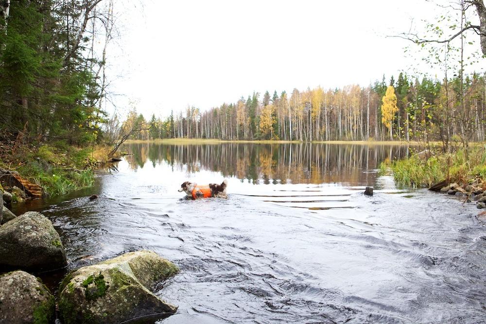 fire_-_2011-10-15.jpg