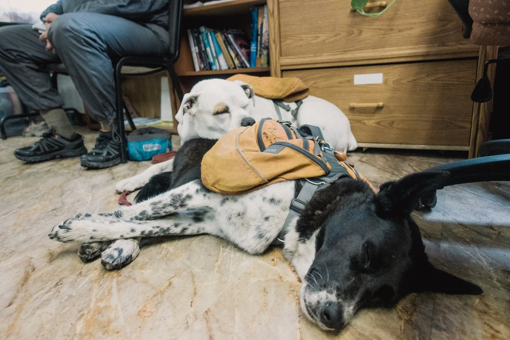 Tired hiker doggies.