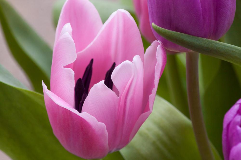 042011 Spring-9.jpg