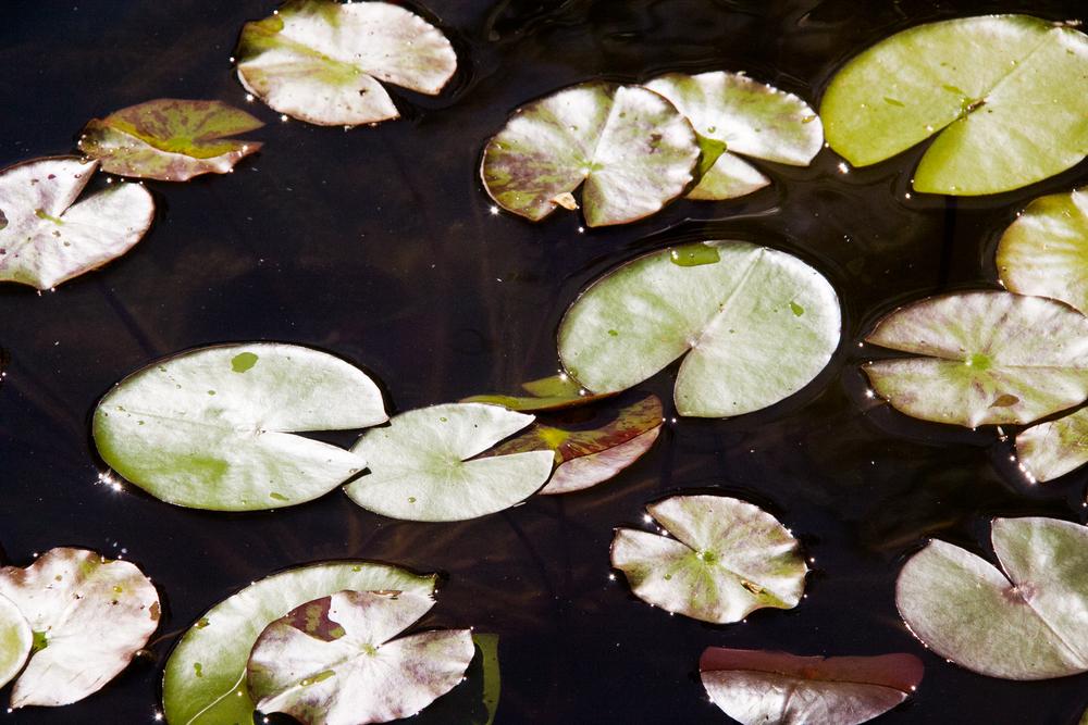 Nature-15.jpg