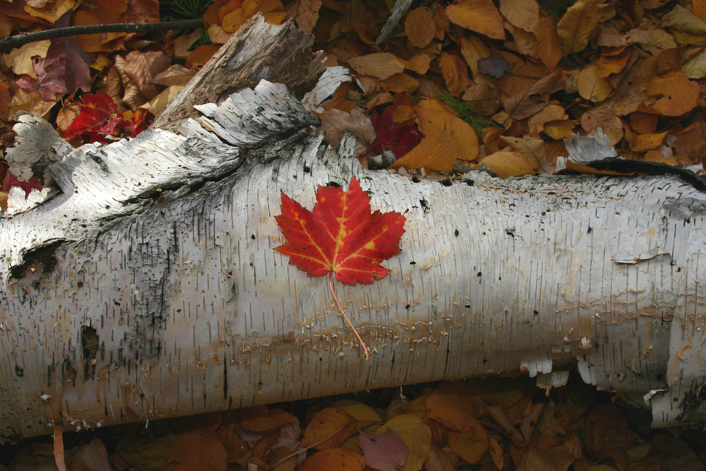 Fall-1.jpg