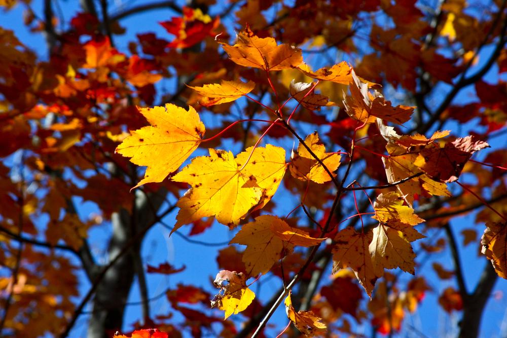 Fall-3.jpg