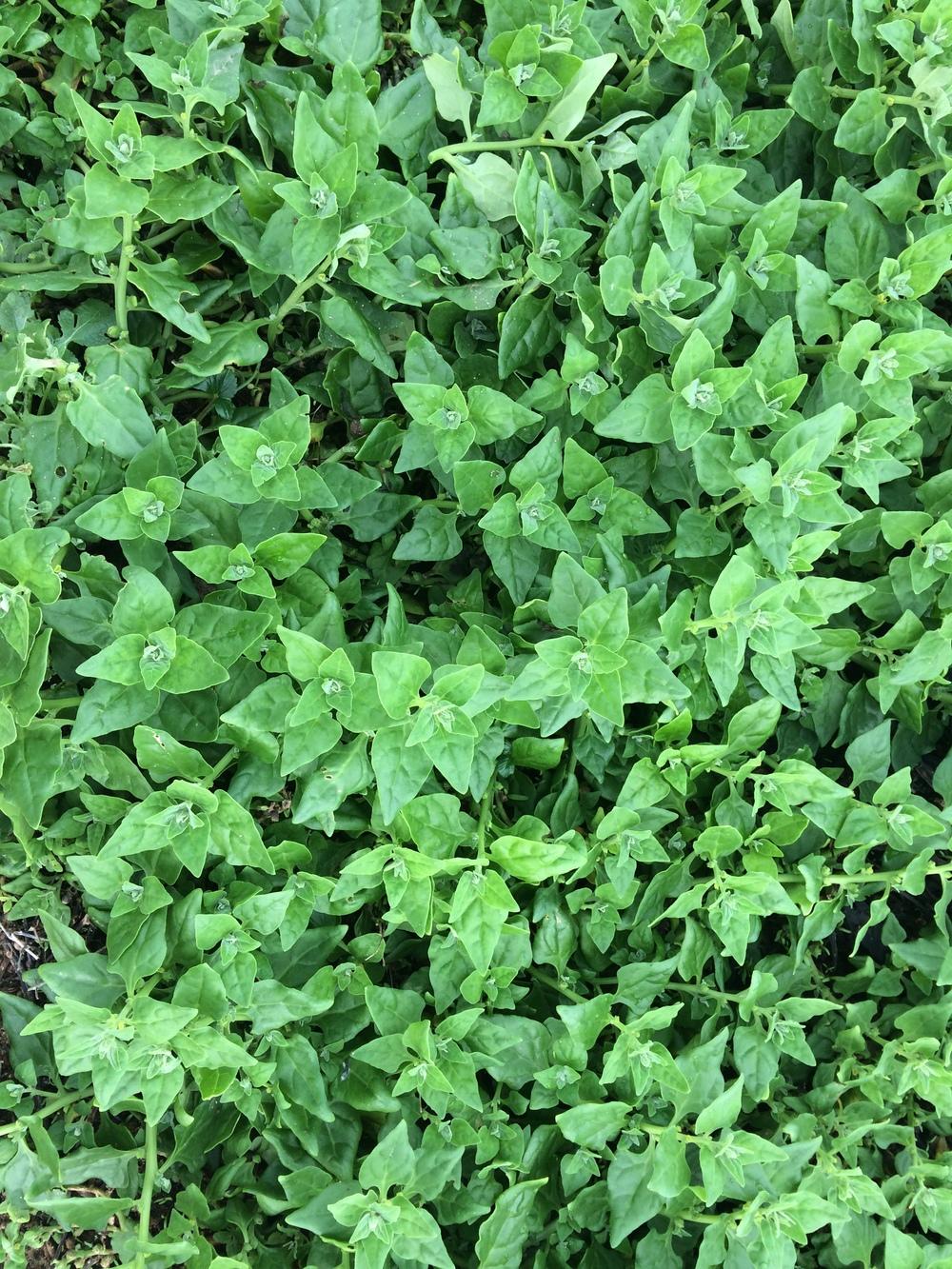 12.7 leafy pattern