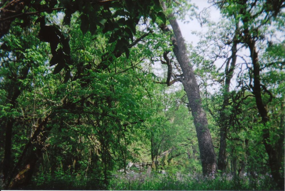 holga_nature_0006.jpg