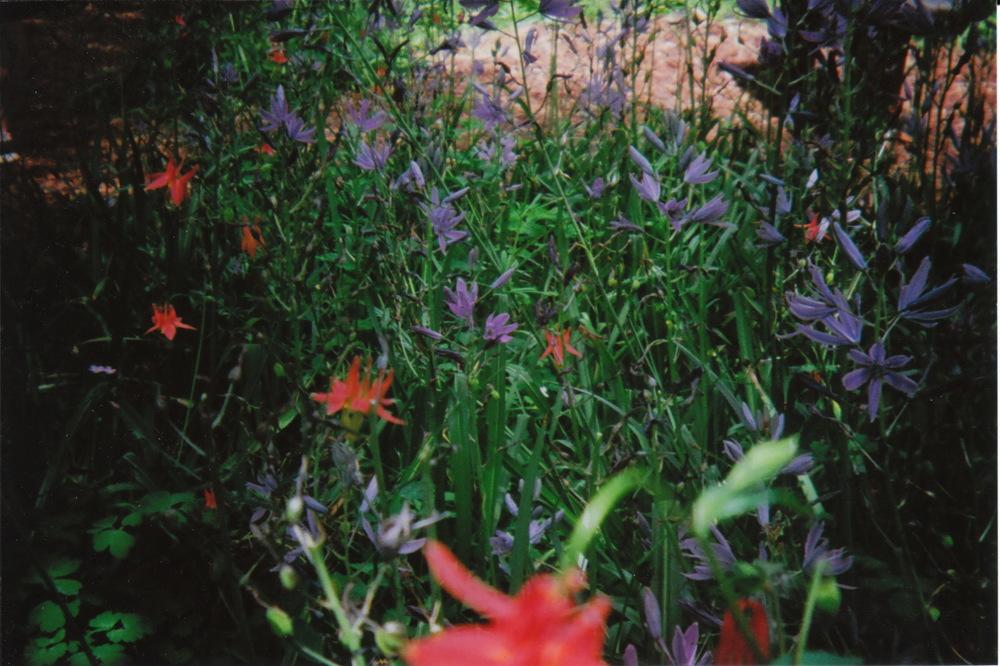 holga_nature_0007.jpg