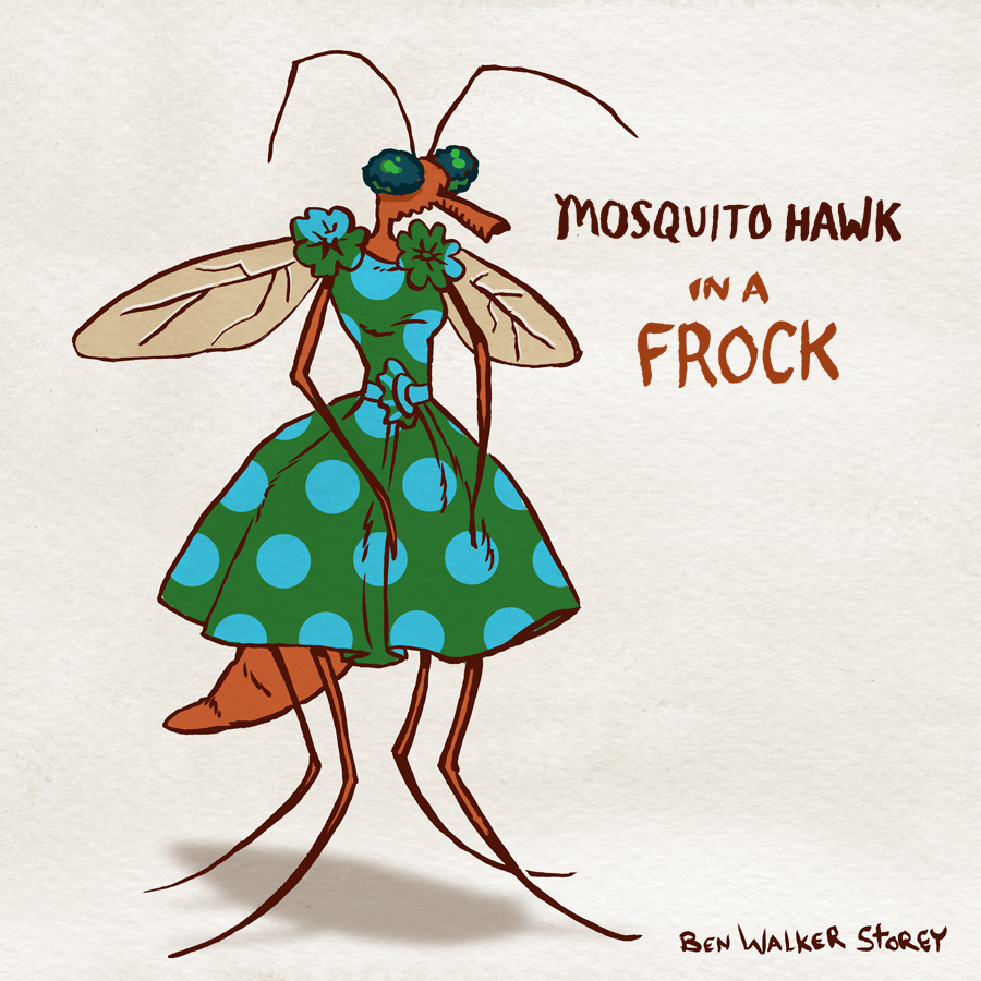 mosquito-hawk-in-frock