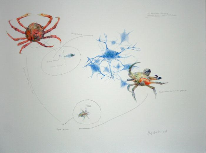 Byung Chul Kim,  Eine wesentliche Täuschung (Ich hoffe, ich bin ein netter Parasit) , 2014, pencil on paper, 100 x 150 cm.