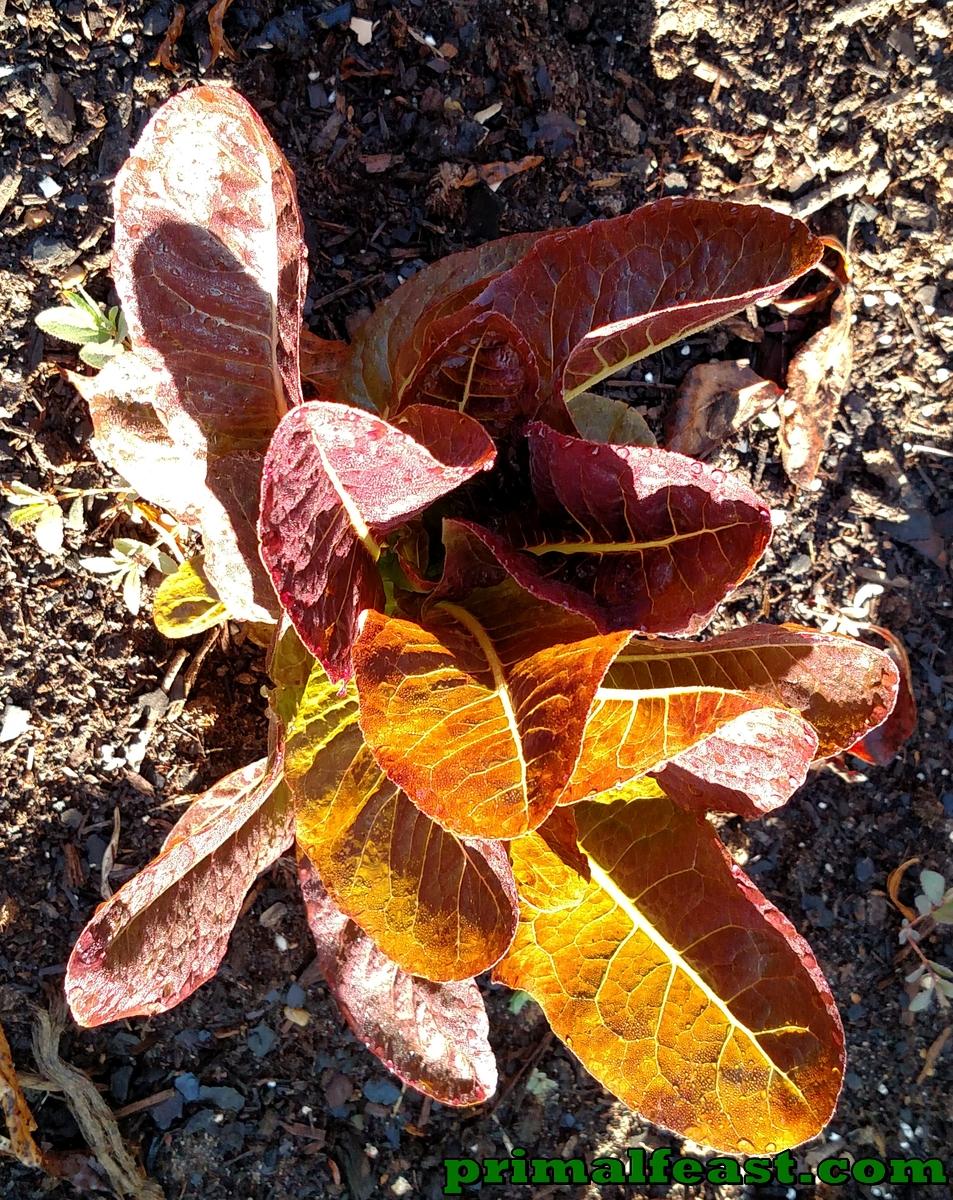 2015-1015-garden-3-005.jpg