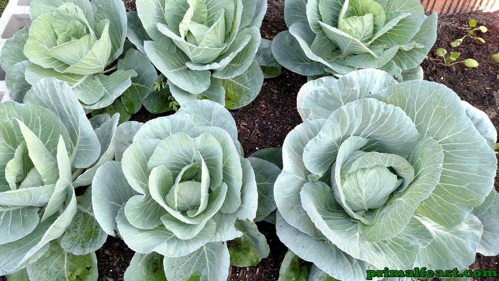 2015-1204-cabbage-garden-3-002.jpg