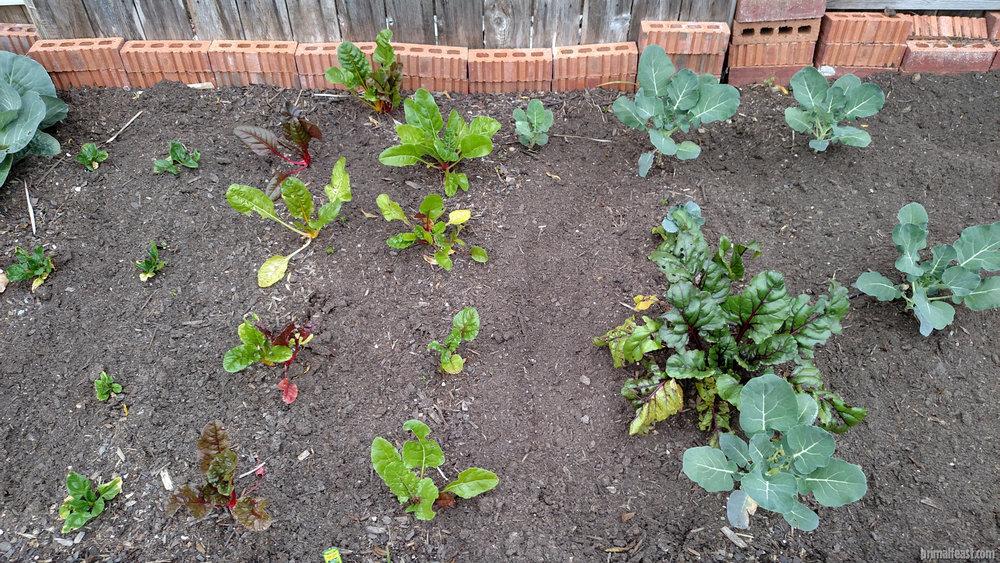 2016-0120-garden-3-001.jpg