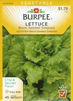 lettuce-black-seeded-simpson.jpg