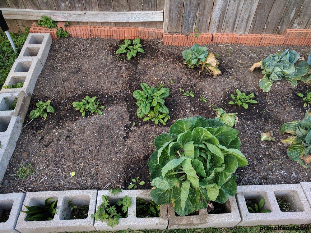 2017 0315 garden #3 001.jpg