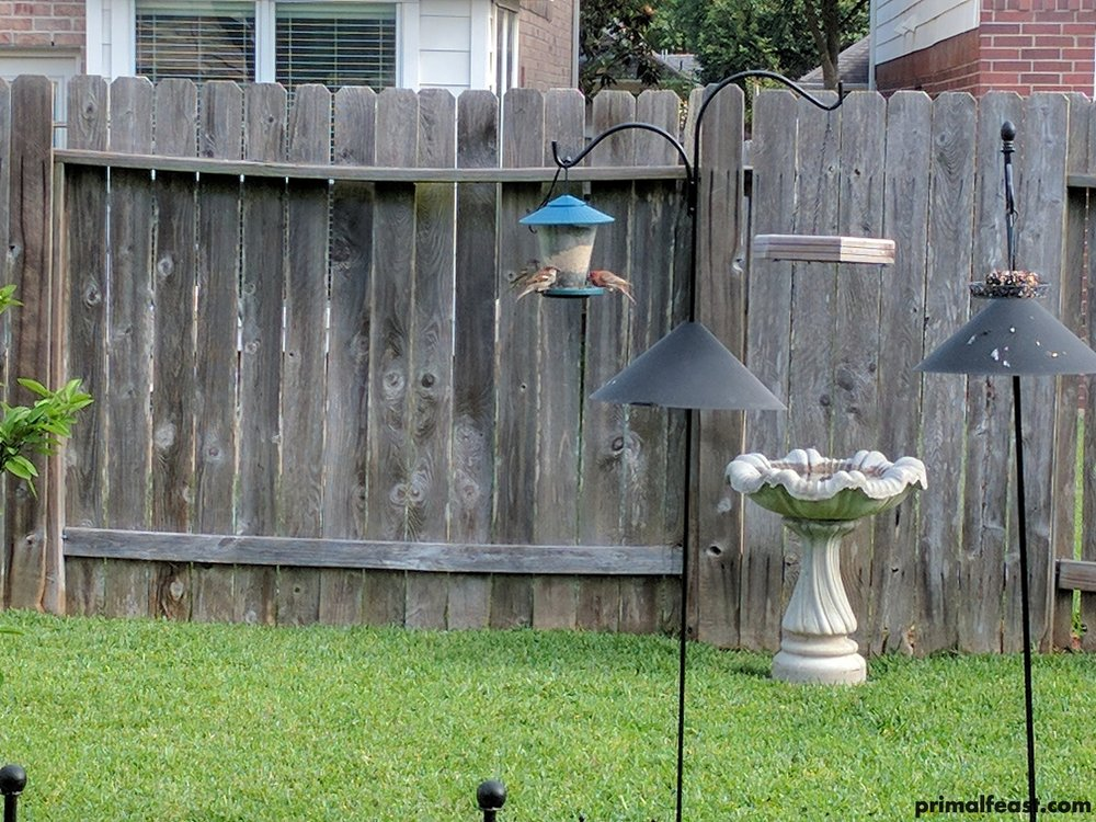 2017 0420 bird feeder 003.jpg