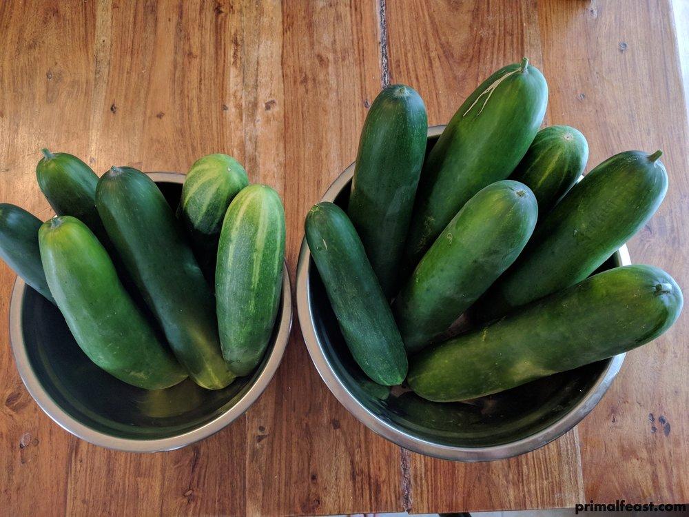 2017 0714 cucumbers 003.jpg