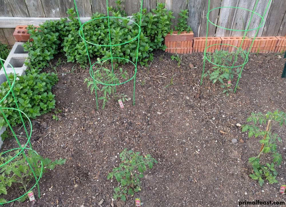 2018 0404 tomatoes, mint.jpg