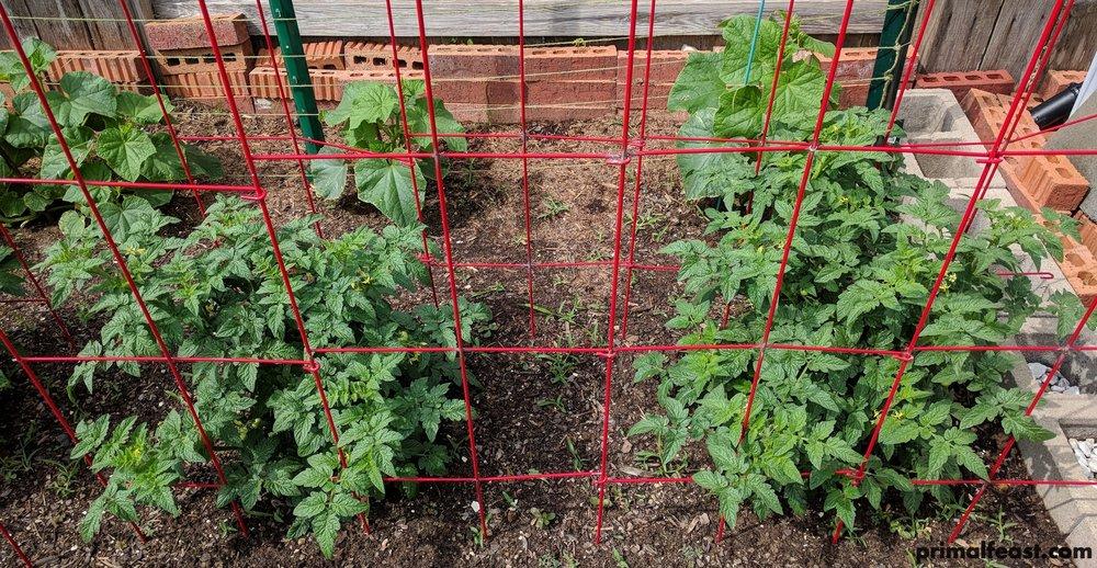 2018 0420 cucumbers & tomatoes 009.jpg