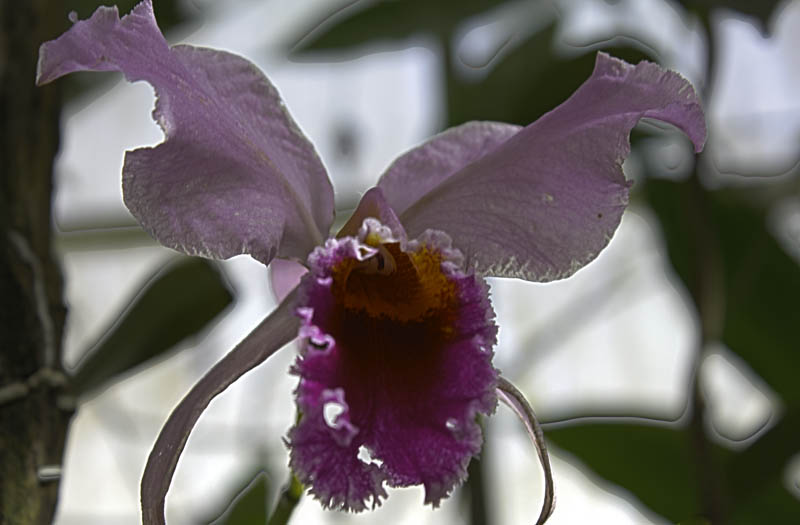 Orchid #7