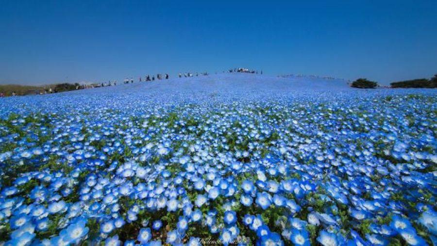 bluefield-0-900x507.jpg