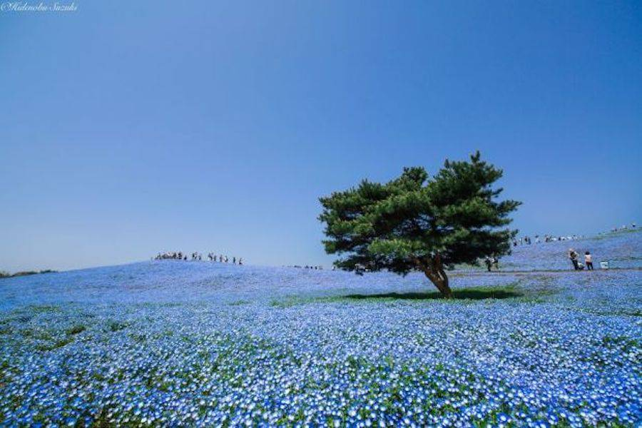 bluefield-3-900x600.jpg