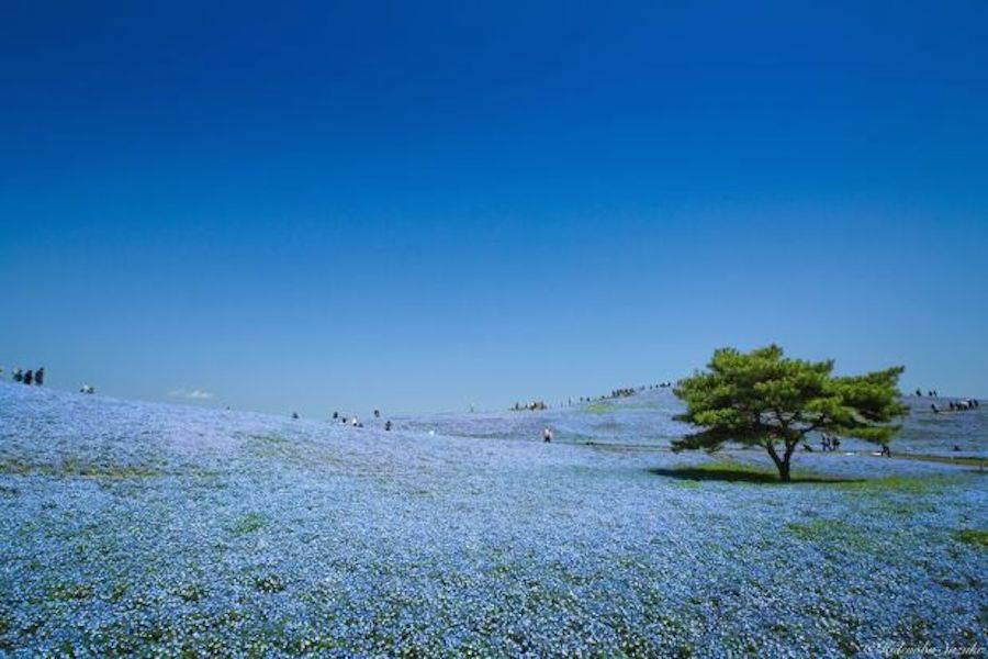 bluefield-2-900x600.jpg