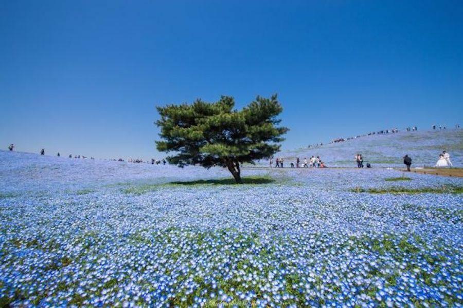 bluefield-5-900x600.jpg