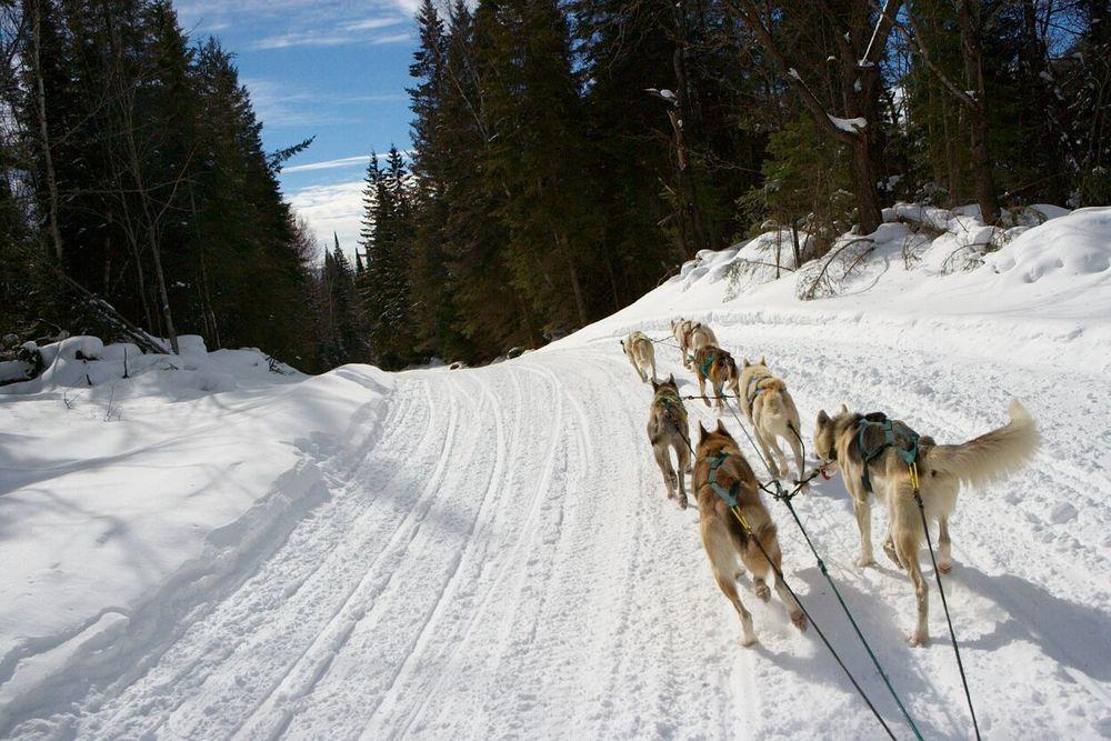 070225_Dog_sledding-00171.jpg