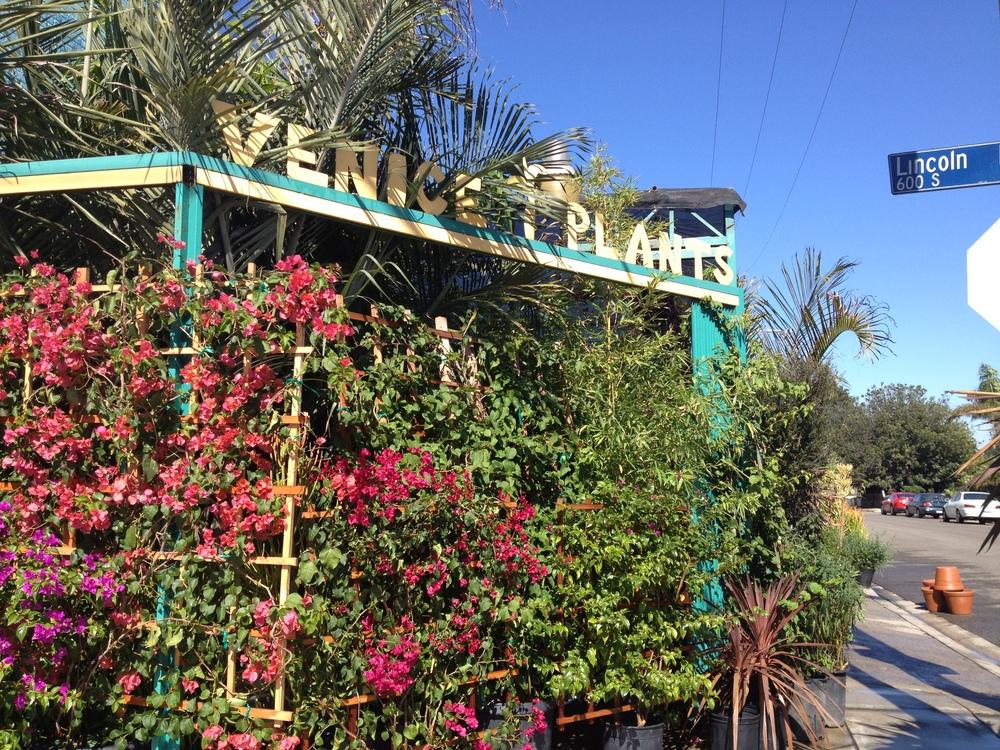 Venice Plants