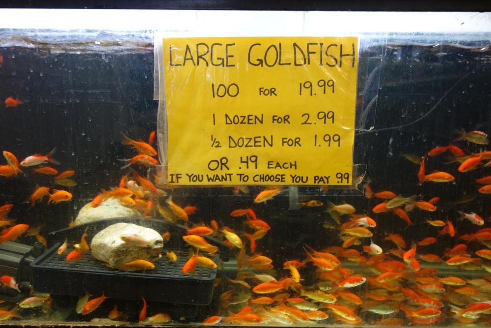 Allan's Aquarium