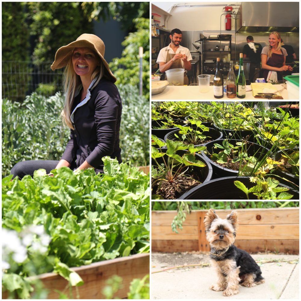 From the left: Courtney Guerra at her Flower Ave Garden; Guerra cooking at Alma restaurant with chef Ari Taymor; plants from the Flower Ave garden; her adorable assistant Mr. Mu. (Photos by Rich Kuras)