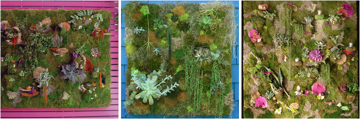 Planted Art moss walls are $75 per square foot no after what kind of design, no matter how many pockets, no matter how many elements go into the wall. (Photos courtesy Planted Art)