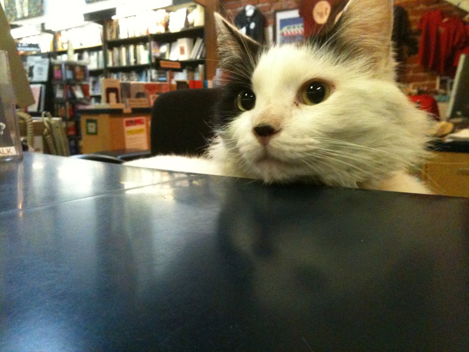 Conan the Librarian, Small World Books' shop cat.
